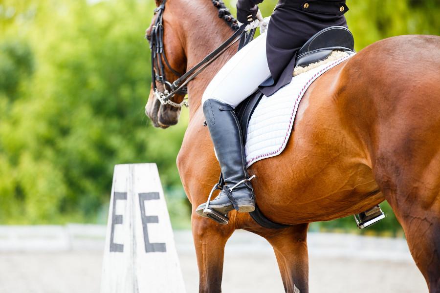 JEŹDZIECTWO - co warto wiedzieć o jeździe konnej